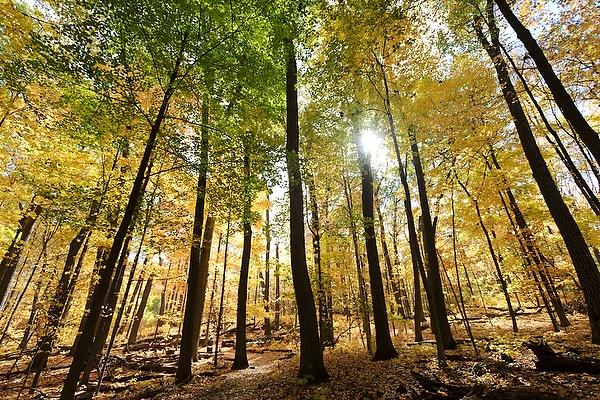 Sunshine through trees in Wingra Woods